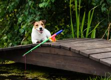 Concept of fishing for beginners and dummies with dog and rod. Jack Russell Terrier dog fishing at pond Stock Photo
