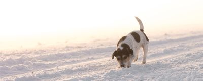 Dog is running on a foggy street stock photo