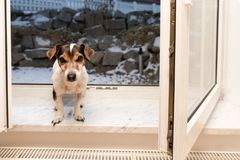 Dog at the open window in cold frosty winter stock photos