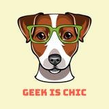 Jack Russell Terrier geek. Dog in smart glasses. Vector illustration. Jack Russell Terrier geek. Dog in smart glasses. Geek is chic text. Vector illustration vector illustration