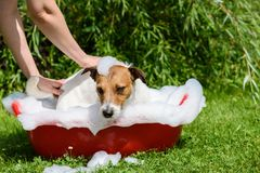 Pet spa care: dog takes a bath at hot summer day stock images