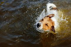 Dog shaking in water high angle view Royalty Free Stock Photography