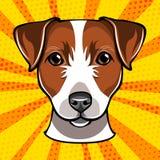 Jack russell terrier head. Dog muzzle. Vector illustration. stock illustration