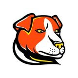 Jack Russell Terrier Mascot. Mascot icon illustration of head of a Jack Russell terrier, a small terrier with origins in fox hunting, viewed from side on Royalty Free Stock Photography