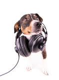 Jack Russell terrier med hörlurar på en vit bakgrund arkivbilder