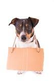 Jack Russell Terrier mit einem Zeichen auf einem weißen Hintergrund; stockbild