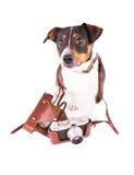 Jack Russell Terrier mit einer Kamera auf einem weißen Hintergrund stockfotografie