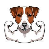 Jack Russell Terrier with muscule. Vector vector illustration