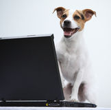Jack russell terrier with notebook Stock Photo