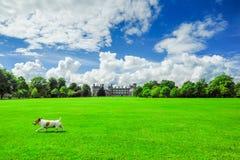 Jack Russell Terrier på gräsmattan av den Kilkenny slotten Royaltyfri Bild
