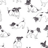 Jack Russell Terrier pattern. Hand drawn Stock Photo