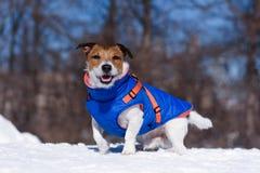 Dog dressed in warm jacket sitting on snow stock photo