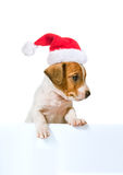 Jack Russell Terrier puppy in red santa cap Stock Photo