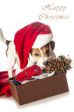 Jack Russell Terrier puppy in Santa hat Stock Images