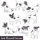 Jack Russell Terrier set ilustracja wektor