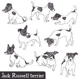 Jack Russell Terrier set. Hand drawn Royalty Free Stock Photo