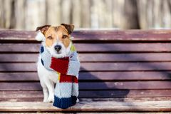 Sunny winter scene with dog wearing cozy warm knitted scarf Royalty Free Stock Photography