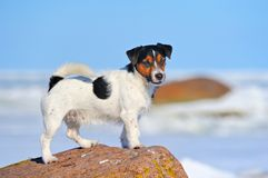 Dog  on the cliff Royalty Free Stock Images