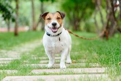 Dog tethered with long line training leash at obedience class Royalty Free Stock Photos