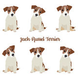 Jack Russell Terrier.   Royalty Free Stock Photos