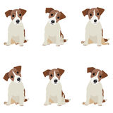 Jack Russell Terrier. Vector Illustration of a dog Royalty Free Stock Image