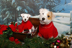 Jack Russells in a sleigh Stock Photos