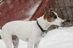 Jack-Schnee Lizenzfreies Stockfoto