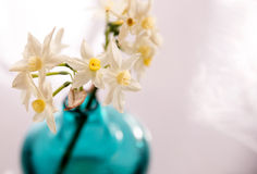 Jack Snipe Daffodil Flowers in a Vase. White and yellow Narcissus Jack Snipe Daffodils displayed in a green glass vase Stock Photo