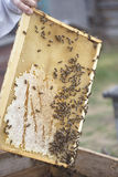 Jack strip, nest for honeycomb close up. Many bees Stock Image