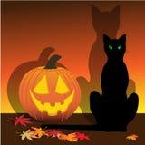 Jack y gato Foto de archivo