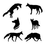 Jackal set vector. Jackal set of black silhouettes. Icons and illustrations of animals. Wild animals pattern stock illustration