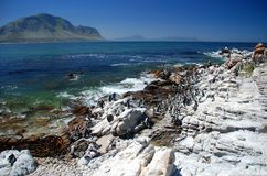 Jackass Penguin Nature Reserve. Betty's Bay. Western Cape, South Africa Royalty Free Stock Images