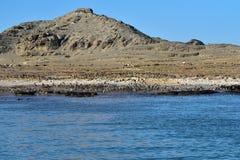 Jackass pingwiny Namibia, Afryka Obraz Stock