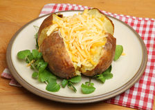 Jacket or Baked Potato with Cheese Royalty Free Stock Images
