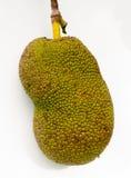 Jackfruit στο δέντρο Στοκ εικόνες με δικαίωμα ελεύθερης χρήσης