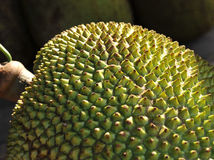 Jackfruit Fotos de Stock