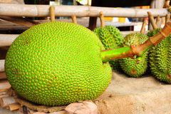 Jackfruit. Is a tropical fruit with yellow color and sweet taste Royalty Free Stock Images