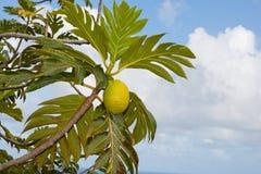jackfruit Στοκ φωτογραφία με δικαίωμα ελεύθερης χρήσης