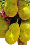 Jackfruit. Stockfoto