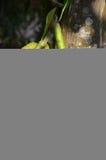 Jackfruit Stock Afbeeldingen