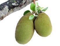 Jackfruit Royalty-vrije Stock Foto