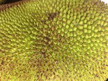 Jackfruit Obrazy Royalty Free