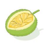 Jackfruit Lizenzfreies Stockfoto