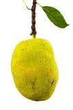 Jackfruit con licencia Imágenes de archivo libres de regalías