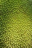 Jackfruit de amadurecimento Fotografia de Stock Royalty Free