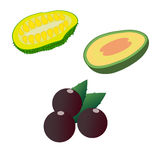 Jackfruit, feijoa and acai isolated on white background. Editable and design suitable  illustration. Royalty Free Stock Image