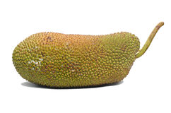 Jackfruit fruit. Royalty Free Stock Image