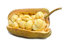 Jackfruit fruit. Stock Image