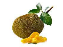 Jackfruit isolated on white background Royalty Free Stock Image
