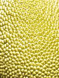 Jackfruit macro Royalty Free Stock Photo